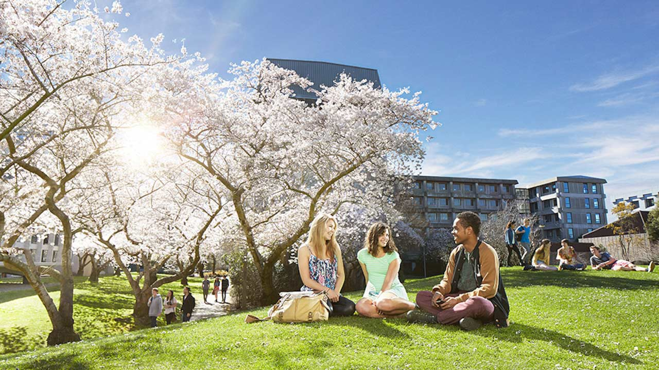 Three women sit on the grass under a white flowered tree on University of Canterbury's campus