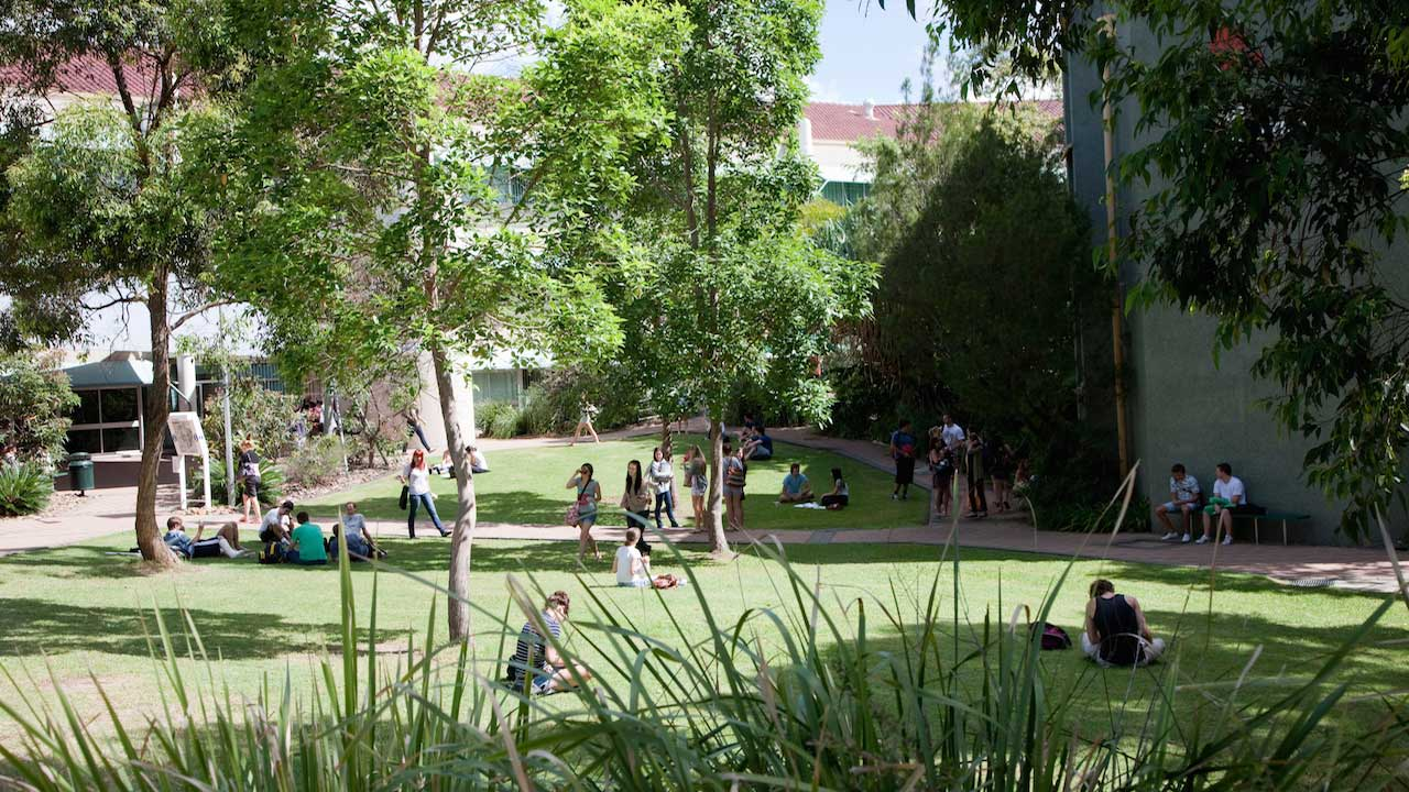 Groups of students sit on the sunny quad on Griffith's Gold Coast campus